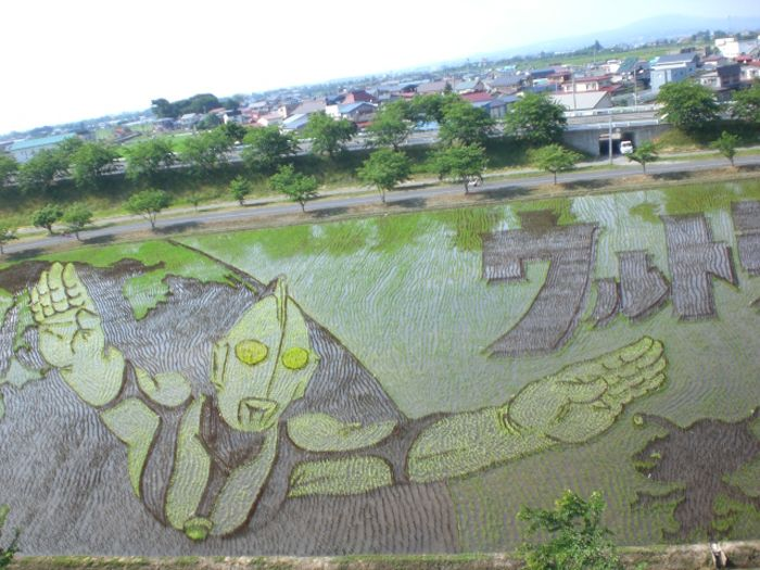 Ultraman: Tanbo Rice Art Display « SciFi Japan