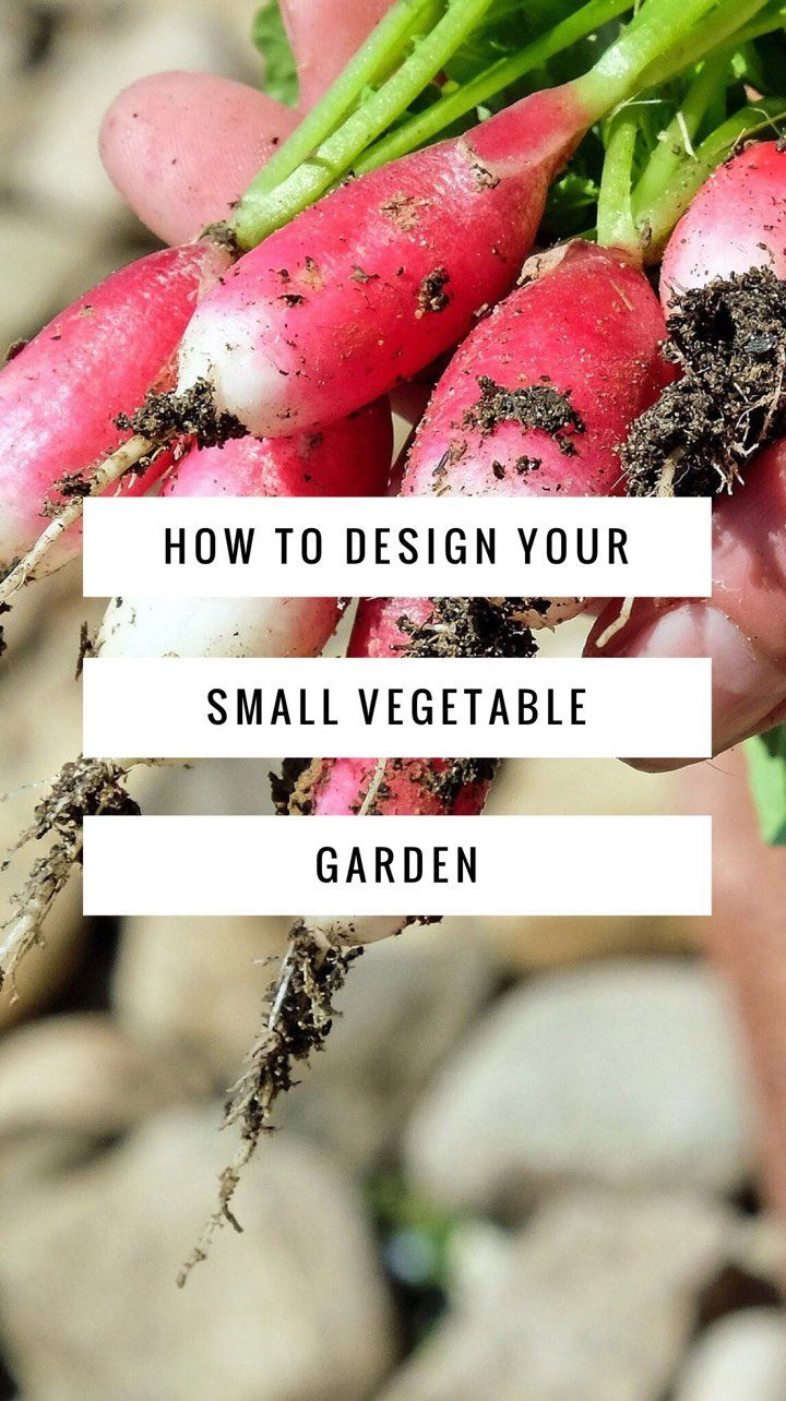 How to Design a Small Vegetable Garden.  You don't need a lot of space to have a vegetable garden.