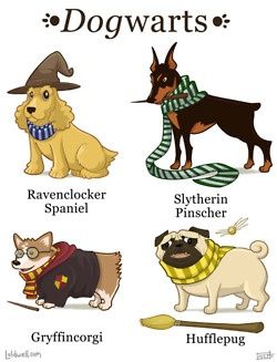 this is SO funny! Ravenclocker Spaniel, Slytherin Pinscher, Griffincorgi, HUFFLEPUG