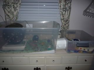 Bin cage?? - Hedgehog Central – Hedgehog pet care & owner forum