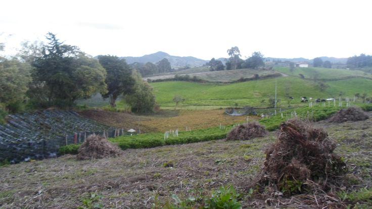 excelente terreno de 3 cuadras en venta  ubicado en la union ant precio; $330,000,000 www.inmueblesoriente.com