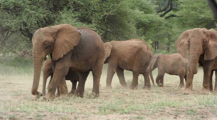 Great photos by our guides in Tanzania