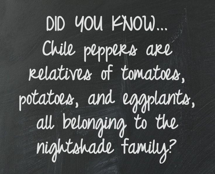 Fun #chilepepper #facts