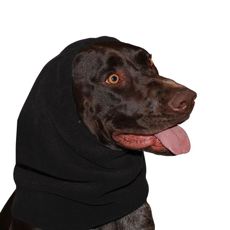 Black German Shorthaired Pointer GSP Dog Hood, great for warmth and laying with our dog rain coat. High performance material. Made in the USA.