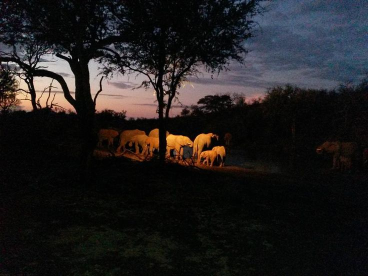Beautiful Evening at the waterhole with a big herd of Elephants making their way around the lodge Photo credit: Chantelle Terblanche