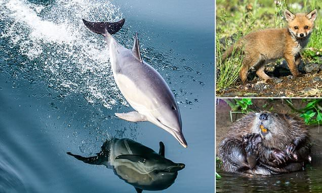 Mammal photograph of the year is striking photo of a leaping dolphin #DailyMail
