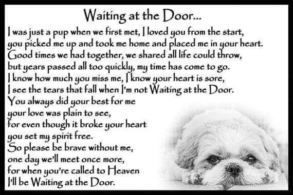 Waiting At The Door Dog Poems Shih Tzu Dog Pet Loss Grief