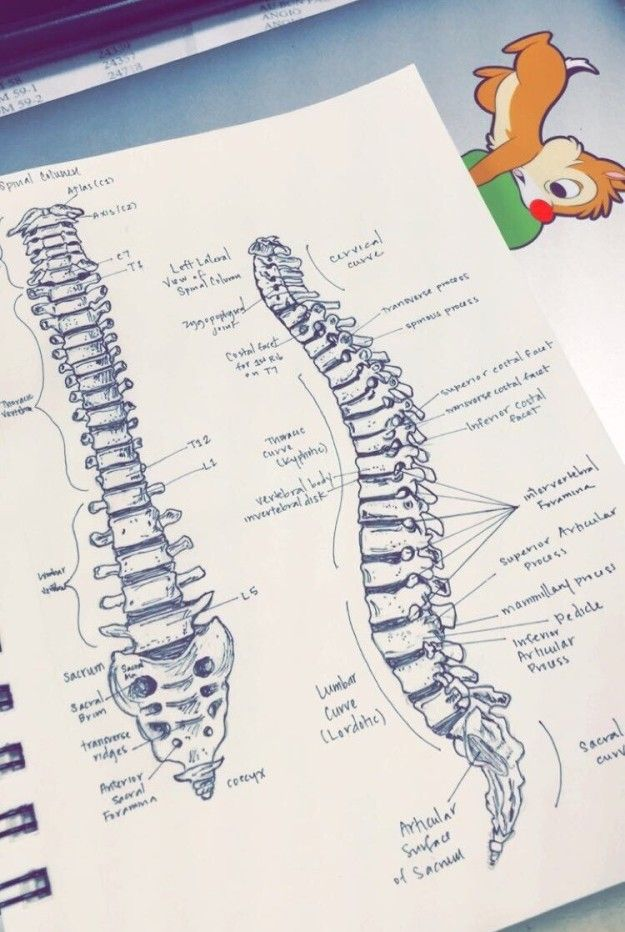 Who knew a spine could be aesthetic? | Community Post: 18 Gorgeous Study Notes That Should Be Framed As Art