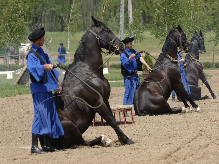 Madziary i  konie