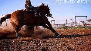 western horse gif - Google Search