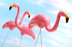 Love 'em or Hate 'em, Pink Flamingos Live On, plastic pink flamingos popular culture
