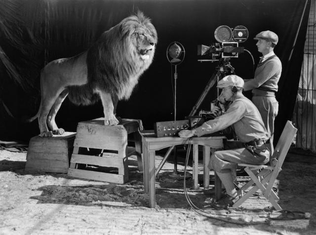 Cómo se filmó el logo del león de la Metro Goldwyn Mayer.