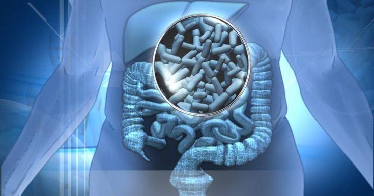 Probióticos – cómo elegir el mejor (y que no nos engañen)