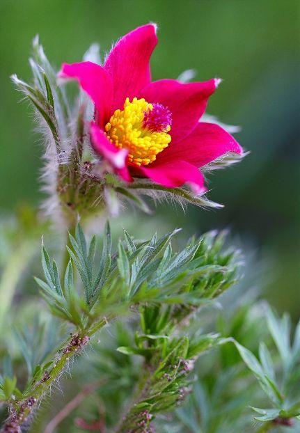 17 Best Images About April Flowers On Pinterest Capri