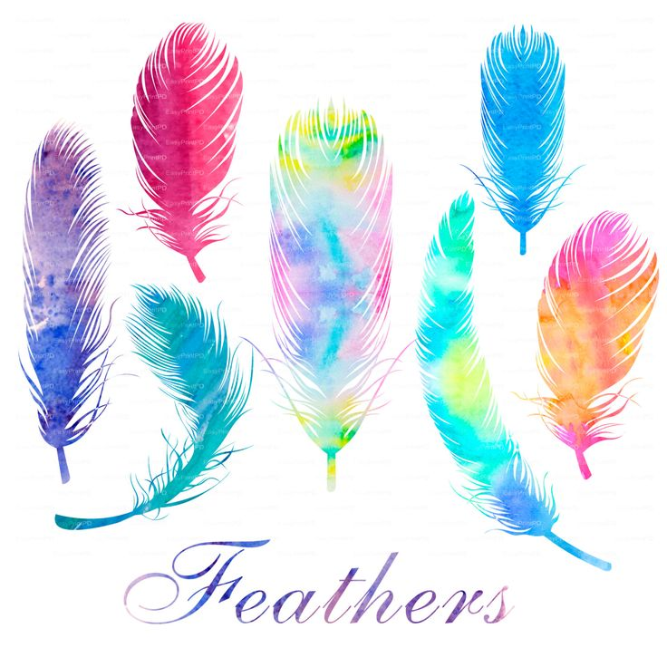 Watercolor Feathers Clip Art Digital Clip Art PNG File EPS Vector Design Elements Feather