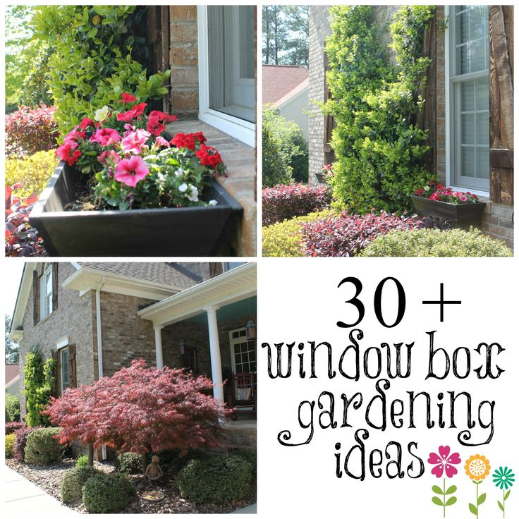 shade plants for windows 62 best windows in bloom window boxes images on pinterest