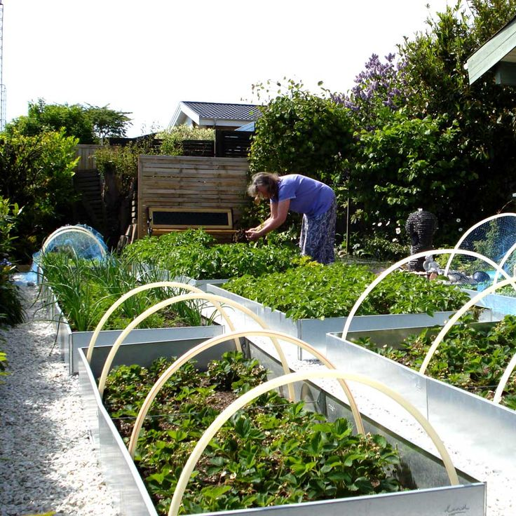 De aflange højbede og plantekasser er oplagte til køkkenhaven hvor de gør det muligt at dyrke alle slags grøntsager og krydderurter intensivt på lidt plads.