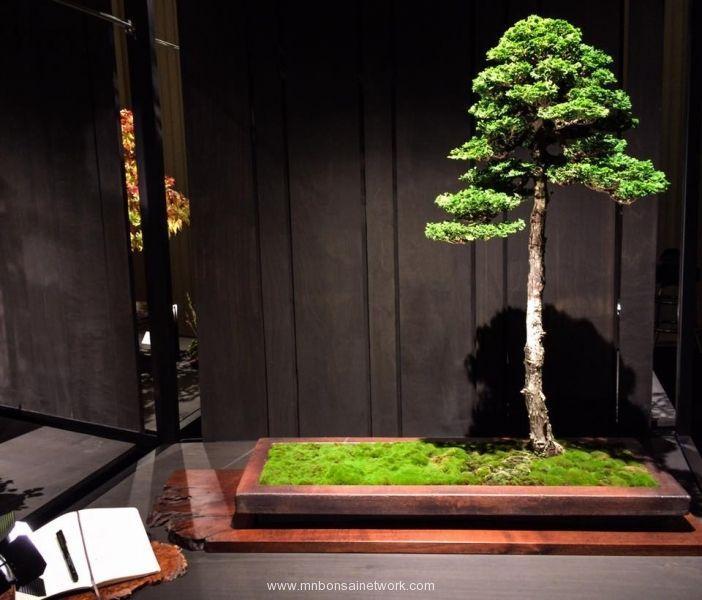 Mike Pollock Hinoki Cypress Bonsai Photo by Naedoko Bonsai