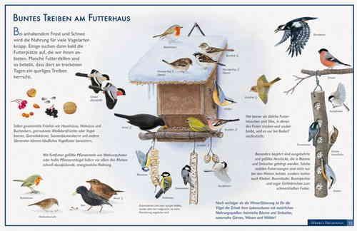 Vogelposter Fur Schule Kindergarten Und Zu Hause Im Kinderpostershop Poster Shop Vogel Im Winter Winter Poster