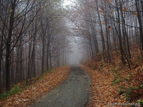 Mysterious road in the woods near city of Kosice, in a resort called Jahodna, Jahodná, Slovakia
