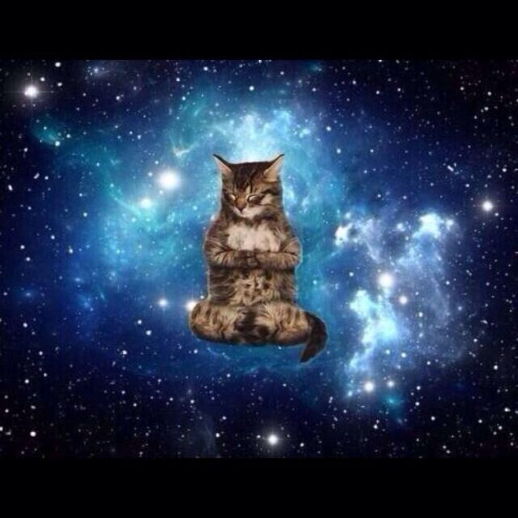 17 Best images about Cats in Space on Pinterest | Cats ...