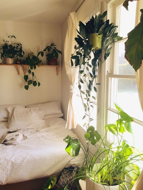 Bedroom filled up with plants. Home ideas decoration