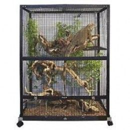 How to clean fish tanks and reptile cages properly