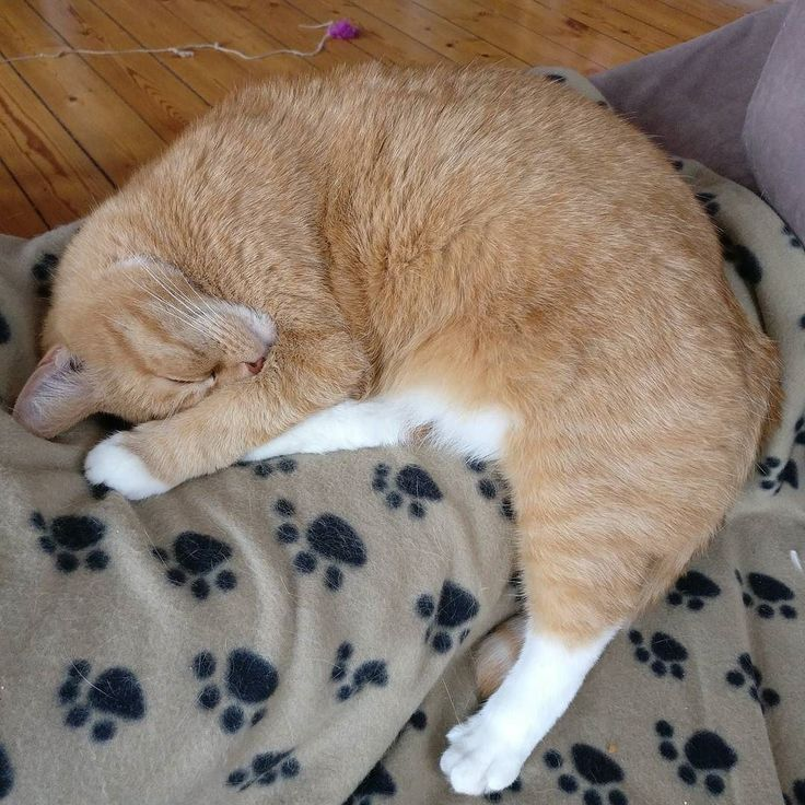 Lazy Saturday. Actually this is business as usual. Because when you're a #cat everyday is a lazy day.