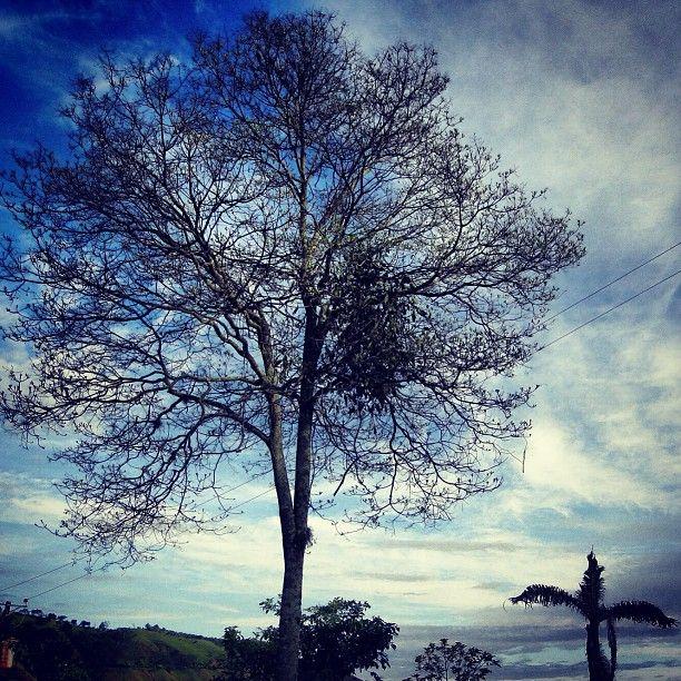 Arbol solitario en las montañas de Genova, Quindio. Foto gracias a http://instagram.com/fobos999