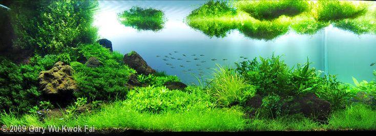 2009 AGA Aquascaping Contest - Entry #112