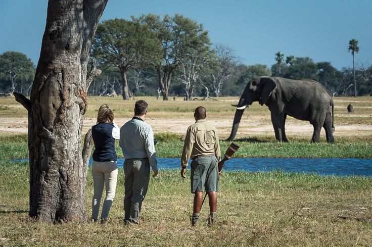 Ask your guide about a walking safari at Linkwasha...