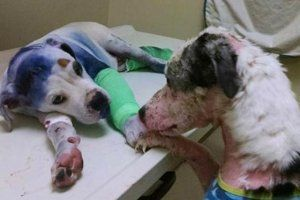 How One Photo Changed the Life For An Abused Dog Named Sammy