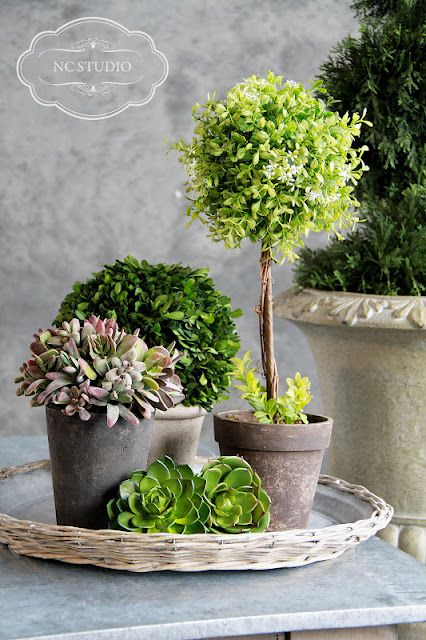 potted plants, could be a great centerpiece