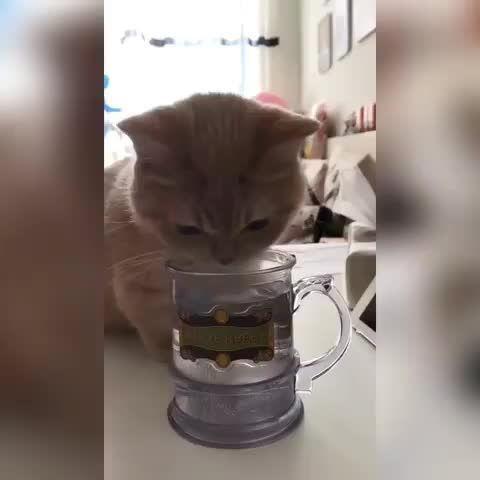 Papa, lass deine Tasse Wasser besonders süß sein, Papa, dein Wasser soooo süß …   – Adorable Kittens