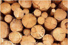 ako skladovať a sušiť palivové drevo