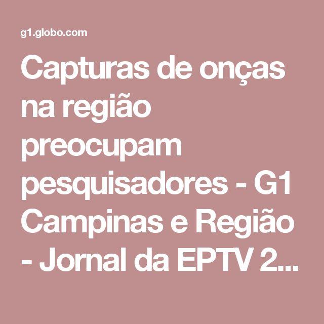 Capturas de onças na região preocupam pesquisadores - G1 Campinas e Região - Jornal da EPTV 2ª Edição - Catálogo de Vídeos