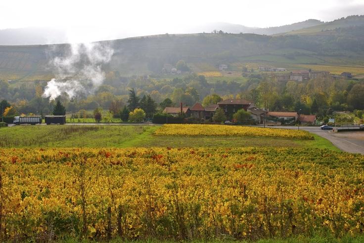 Autumn in Beaujolais region, France