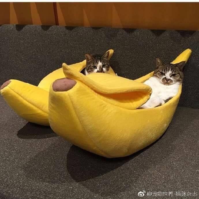 cuteness おしゃれまとめの人気アイデア pinterest puffy fluffy かわいい動物の赤ちゃん 可愛すぎる動物 猫用ベッド