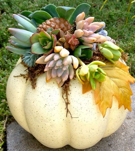 Living Succulents in a White pumpkin for Halloween by WoogiesPlace, $20.00