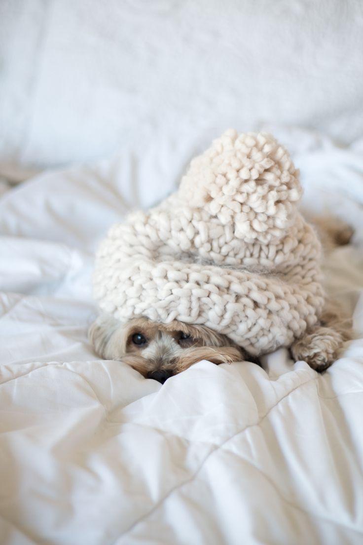 Cachorrinho da raça Yorkshire deitado na cama com edredom branco e gorro de tricô creme.