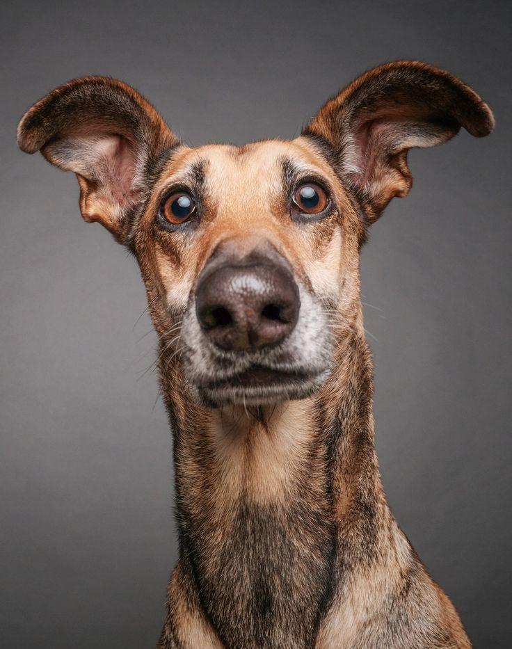Очем думает ваша собака |Esquire