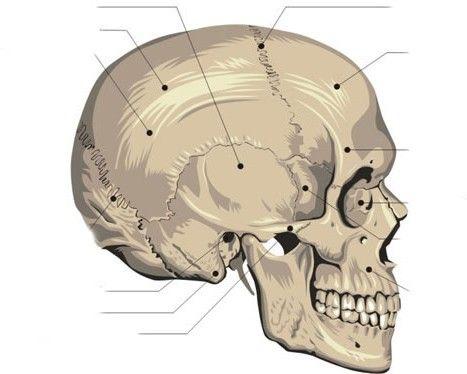 Skeleton Flash Cards (free printable) | Nursing Learning ...