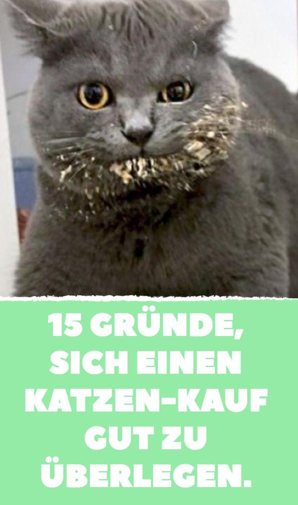 15 razões para pensar bem em comprar um gato.   – Tiere
