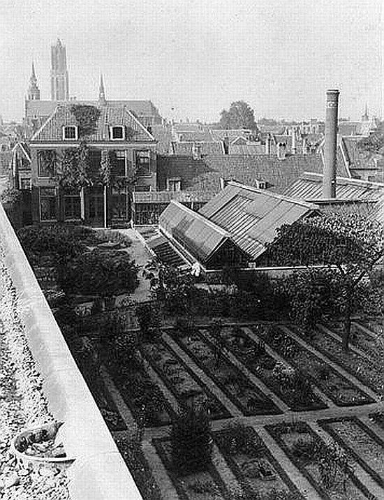 De Nieuwegracht | 1924 | De botanische tuin van de Hortus Botanicus van de Rijksuniversiteit