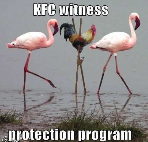 Protection | Funny Pictures!: Kfc Witness, Protection Program, Witness Protection, Funny Pictures, Funny Stuff, Humor, Flamingos, Funny Animal, Funnystuff