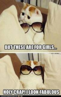 heehee: Cats, So Cute, Funny Cat, Funnycat, So Funny, Sunglasses, Fabulou, Socute, Animal