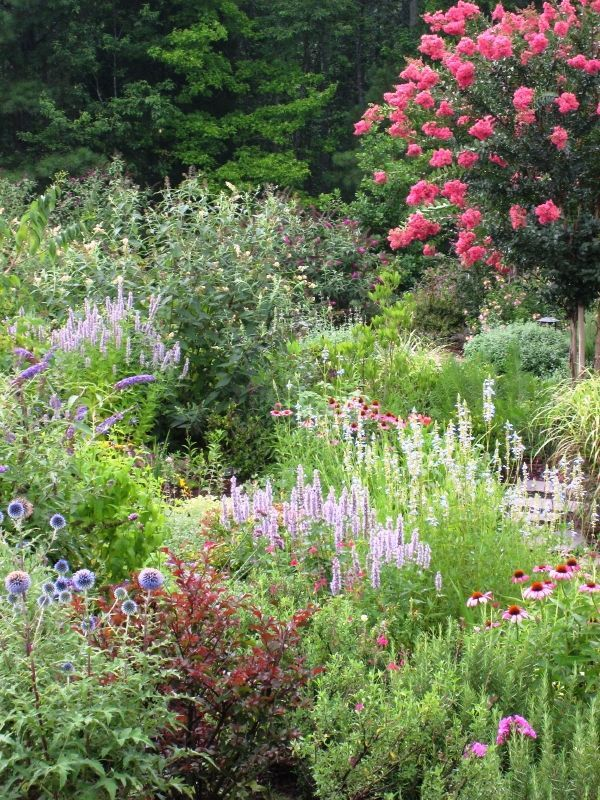 Defining Your Home, Garden and Travel: Designing a Colorful, Deer Resistant Garden