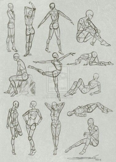 Позы , анатомия