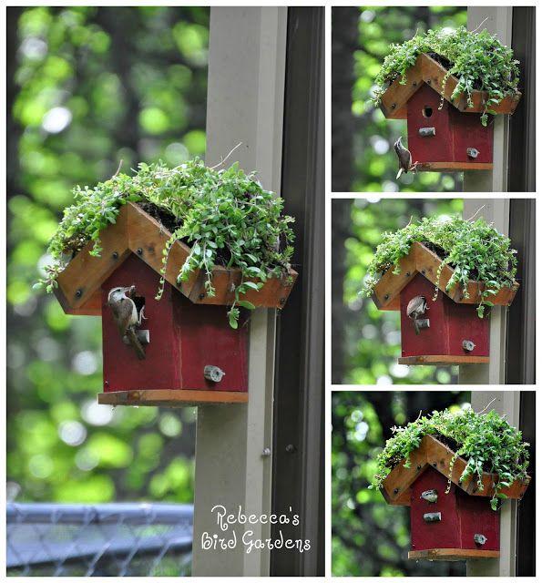 Living Roof Birdhouse, Green Roof, Carolina Wren, Rebecca's Bird Gardens Blog: DIY Living Roof Birdhouse