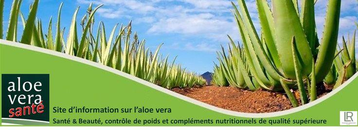Comment cultiver la plante aloe vera chez soi. Attention: les jus d'aloe vera n'ont aucun interet, vérifiez que vous buvez du gel ou pulpe d'aloe vera et si possible avec du miel comme chez LR Health and Beauty